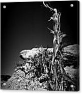 Rock And Branch Acrylic Print