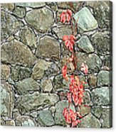 Rock And Ivy Design  Acrylic Print