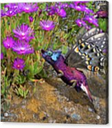 Rock Flower Birguana Fly Acrylic Print