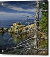 Rock Formations And Trees On The Shoreline In Acadia National Park Acrylic Print