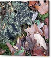 Rock Running Cedar Leaves And Lichen  Natural Abstract Acrylic Print