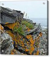 Rockbound Coast Acrylic Print