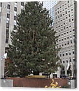 Rockefeller Christmas Tree Acrylic Print
