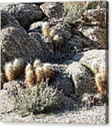 Rocks And Cactus Acrylic Print