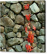 Rocks And Ivy Acrylic Print