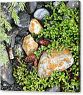 Rocks And Lichen Acrylic Print