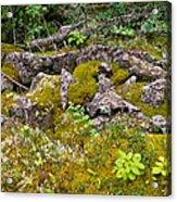 Rocks And Moss II Acrylic Print