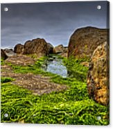 Rocks And Seaweed Acrylic Print