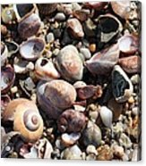 Rocks And Shells Acrylic Print