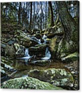 Rocky Branch Acrylic Print