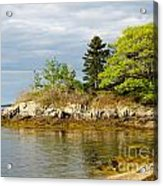 Rocky Coast In Maine Acrylic Print