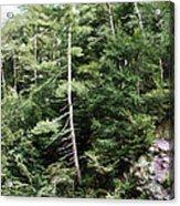 Mountain - Landscape - Trees - Rocky Hillside Acrylic Print