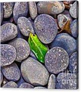 Rocky Landing Acrylic Print