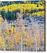 Rocky Mountain Autumn Contrast Acrylic Print by James BO  Insogna