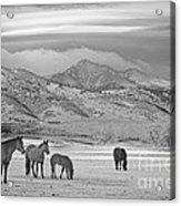 Rocky Mountain Country Morning Bw Acrylic Print