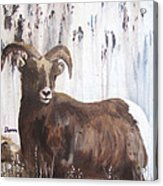 Rocky Mountain High Acrylic Print by Sharon Burger