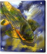 Rocky Mountain Trout  Acrylic Print