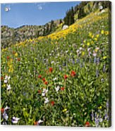 Rocky Mountain Wildflower Landscape Acrylic Print
