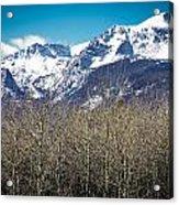 Rocky Mountain Woodland Acrylic Print