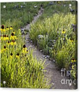 Rocky Top Trail Acrylic Print