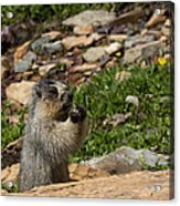 Rodent In The Rockies Acrylic Print