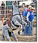 Rodeo Horse Cheers Acrylic Print