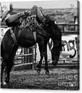 Rodeo Power Of Conviction Acrylic Print