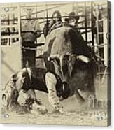 Rodeo Prepared To Be Punished Acrylic Print