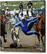 Rodeo Steer Wrestling Acrylic Print