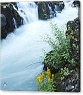Rogue River Falls 5 Acrylic Print