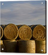 Rolled Hay   #1056 Acrylic Print