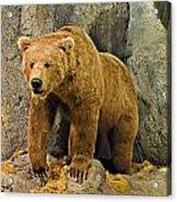 Rolling Hills Wildlife Adventure 1 Acrylic Print