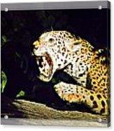 Rolling Hills Wildlife Adventure 4 Acrylic Print