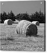 Rolling In The Hay Bw Acrylic Print