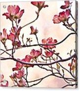 Romance Flora Acrylic Print