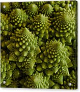 Romanesco Broccoli Close Up Acrylic Print
