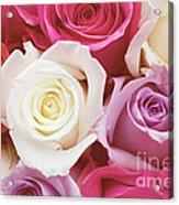 Romantic Rose Garden Acrylic Print