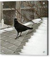 Roof Crow Acrylic Print