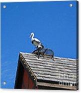 Roof Top Bird Acrylic Print