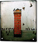 Roof Top Hoppers Acrylic Print