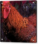 Rooster In October Acrylic Print