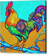 Rooster Perch Acrylic Print
