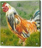 Rooster Rules Acrylic Print