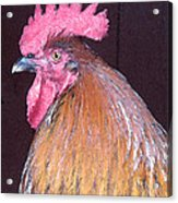 Rooster Watercolor Acrylic Print