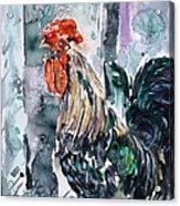 Rooster  Acrylic Print by Zaira Dzhaubaeva