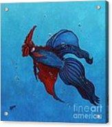 Roosterfish IIi Acrylic Print