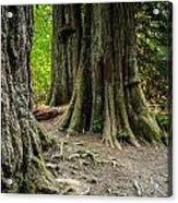 Root Feet Collection 1 Acrylic Print
