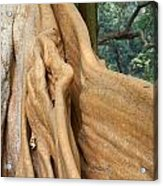 Root Of A Tree Nature Background Acrylic Print