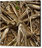 Root System Acrylic Print