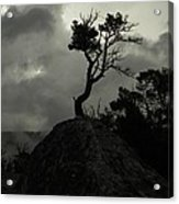 Rooted In Stone Acrylic Print